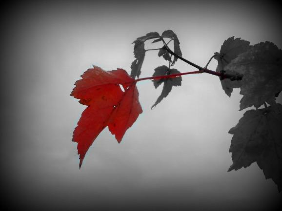 leaffade