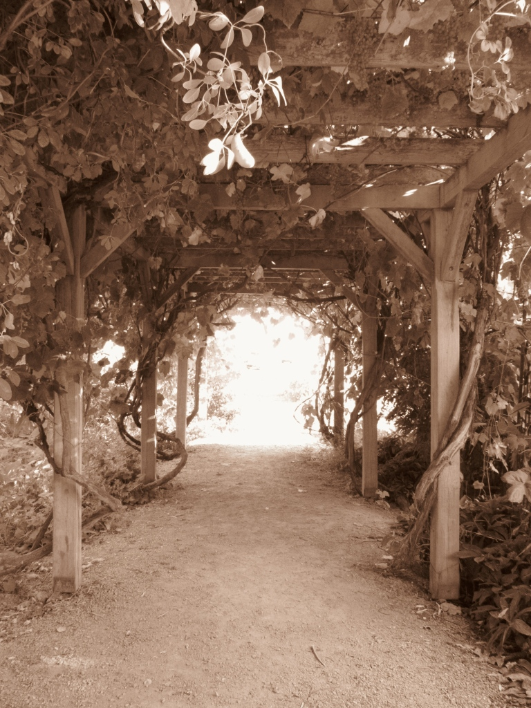 Through The Grapevines